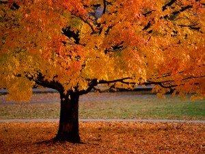 L'automne dans divers 01afc7c91-300x225