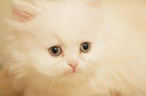 douceur-feline-281200-300x198