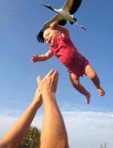 Dumbo, l'enfant volant! dans Humour photos-insolites-1-230x300