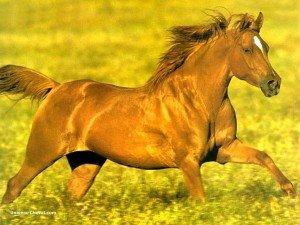 Liberté chérie dans Textes 63348_real_9164_cheval_au_galop_prairie-300x225