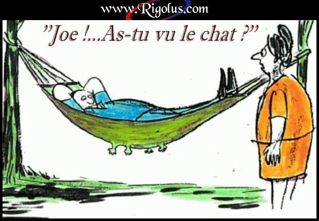 Avez-vous vu le chat? dans Humour b1fo3vjw