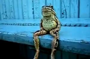 Grandir dans Poésie a-frog-sitting-like-a-human-300x198