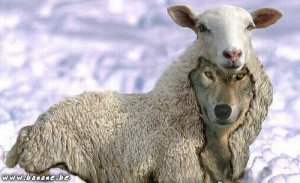 mouton-loup-4f190 dans Echanges
