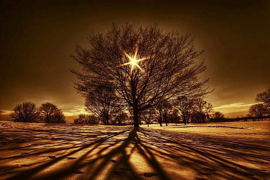 arbre-de-la-vie-1